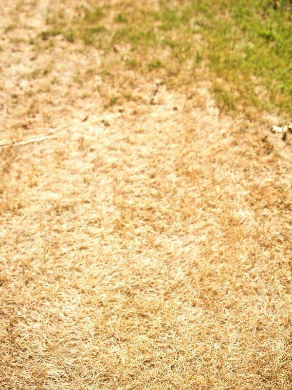 Worn out grass