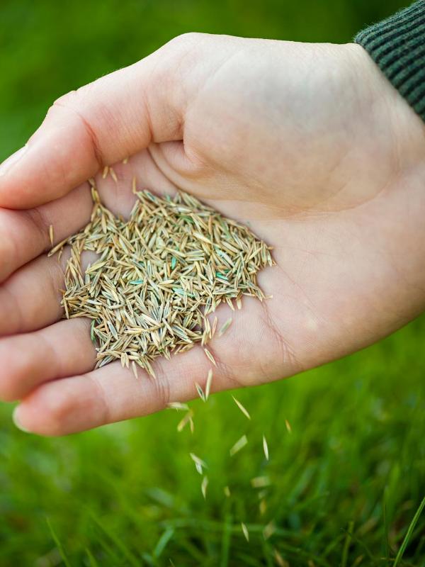 Holding grass seeds
