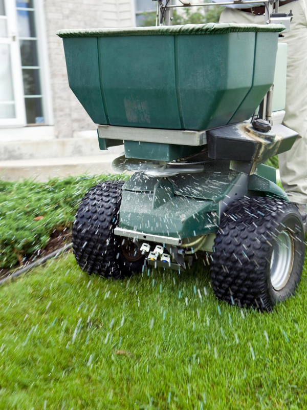 Overseeding a green lawn