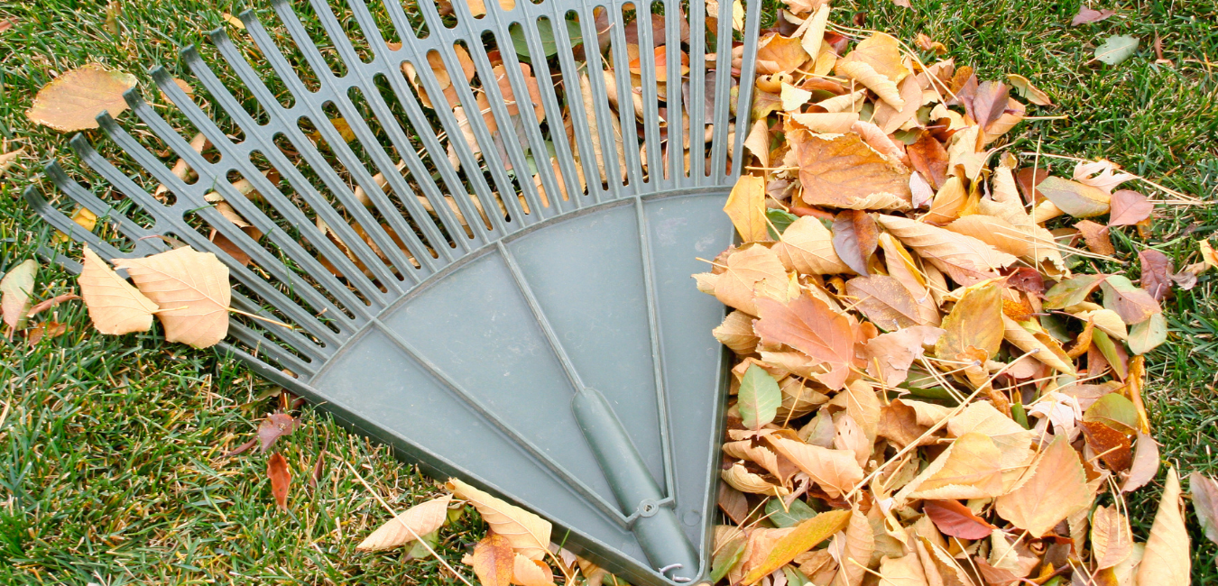 Fall Cleanup for a Brownstown Homeowner
