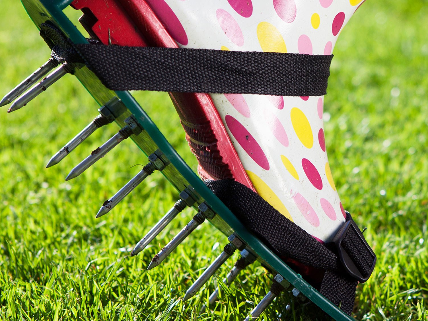 Aerating a Lawn with Aerator Spikes