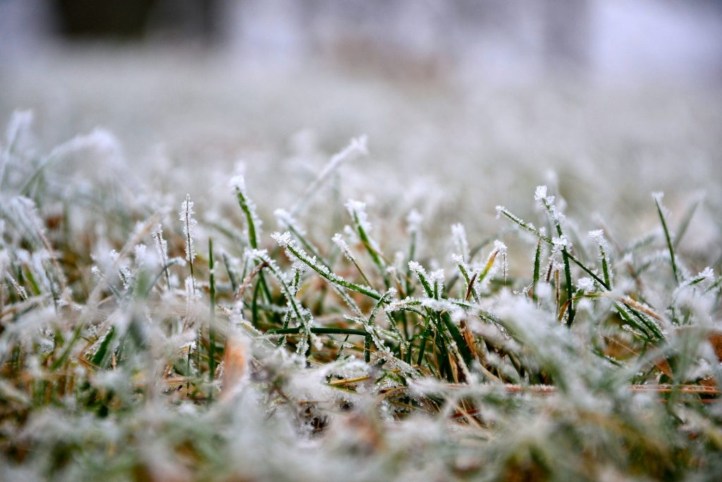 Winter frost on Brownstown Homeowner Lawn